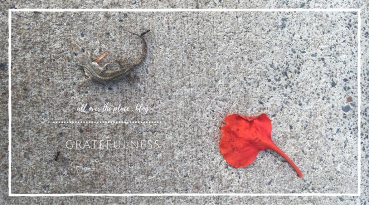 gratefulness-ants-lizard