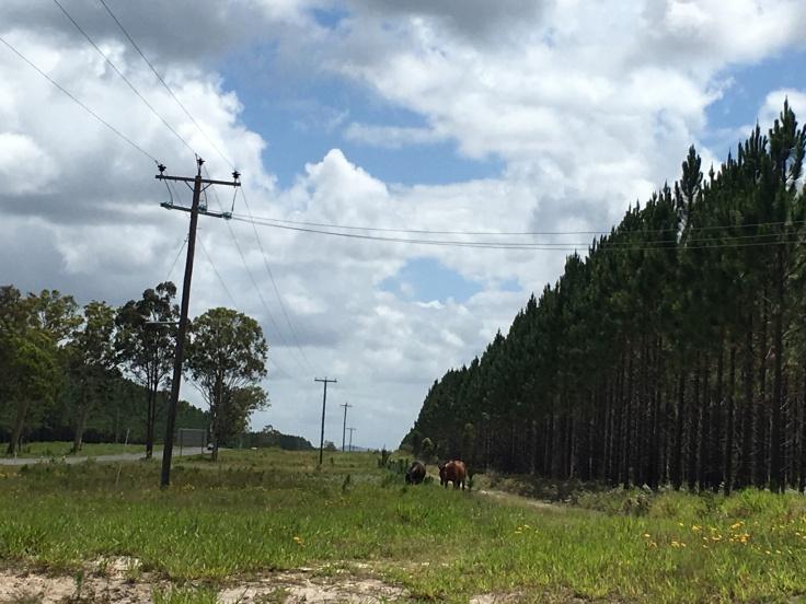 australian wild horses